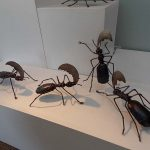 March of the Ants - March Image 2
